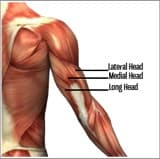 Different Versions of the Triceps Pushdown